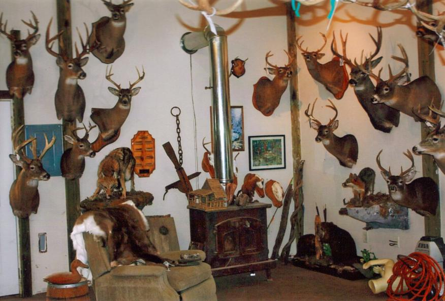 taxidermy studio the buck shop an artistic taxidermy studio